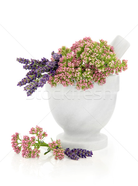 Valerian and Lavender Herb Flowers Stock photo © marilyna