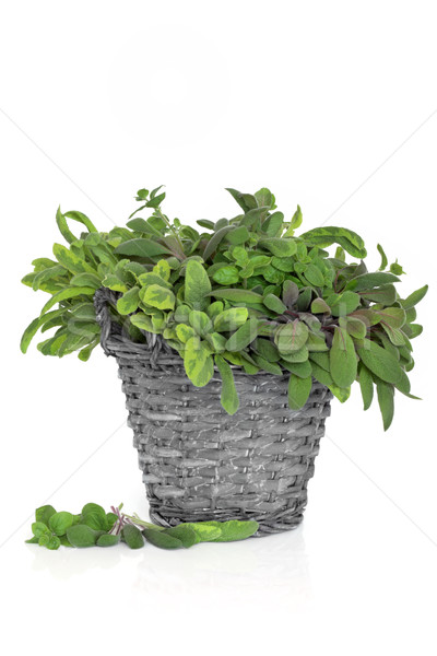 Sage and Oregano Herb Leaves Stock photo © marilyna