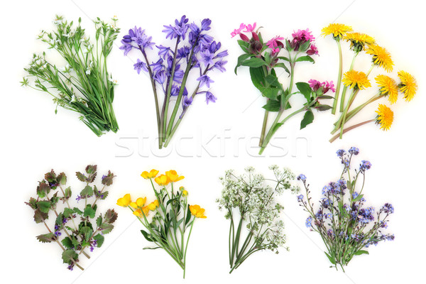 Spring Wildflowers Stock photo © marilyna