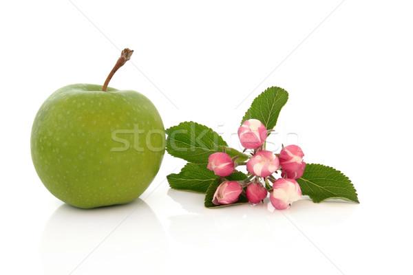 Nagyi alma virág virág levél izolált Stock fotó © marilyna