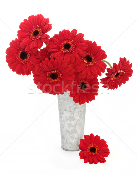 Red Gerbera Flowers Stock photo © marilyna