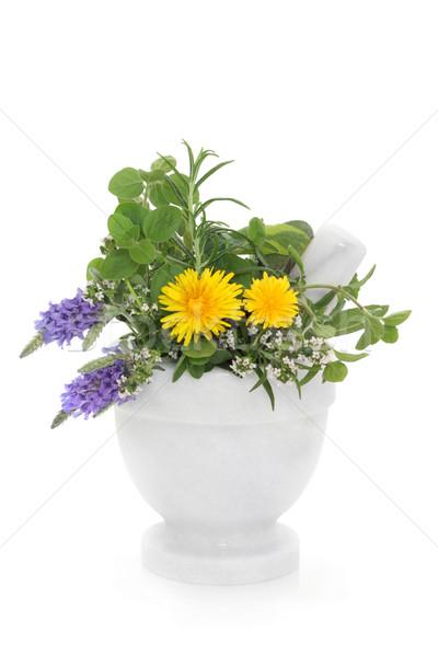 Gyógynövény vadvirág levendula rozmaring pitypang virágok Stock fotó © marilyna