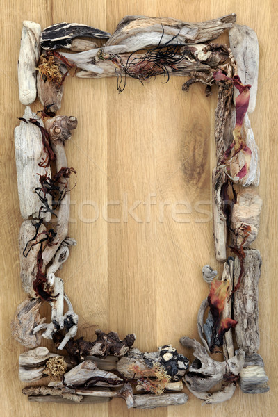 Seaweed and Driftwood Border Stock photo © marilyna
