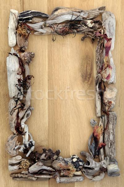 Zeewier drijfhout grens abstract eiken hout Stockfoto © marilyna