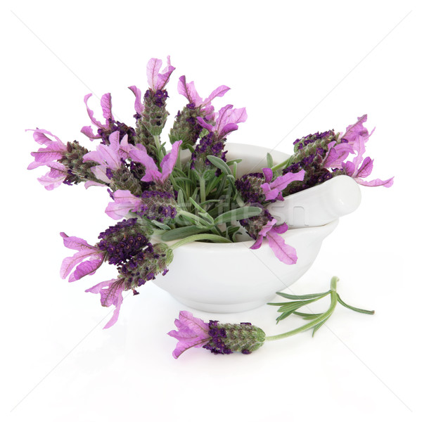 Lavender Herb Stock photo © marilyna
