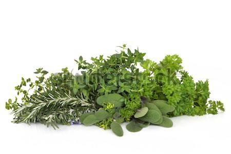 Prezzemolo salvia rosmarino erbe erbe foglia Foto d'archivio © marilyna