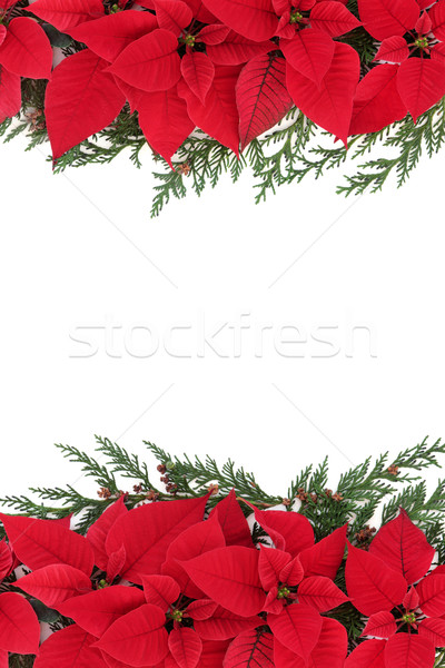 Poinsettia Flower Border Stock photo © marilyna