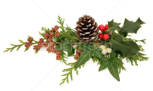 Tél növényvilág dekoráció karácsony állatvilág borostyán Stock fotó © marilyna