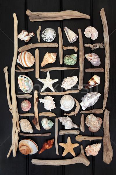 Troncos concha abstrato mar escuro Foto stock © marilyna