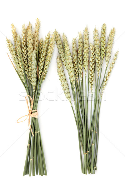 Wheat Bundles Stock photo © marilyna