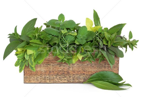 Herbs Stock photo © marilyna