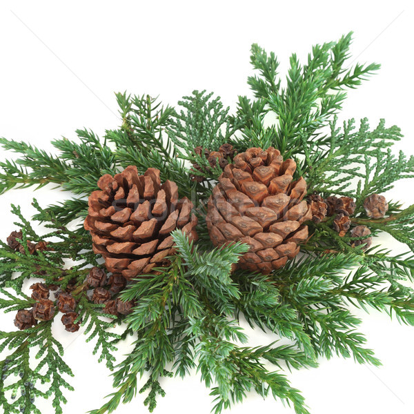 Decorative Winter Greenery Stock photo © marilyna