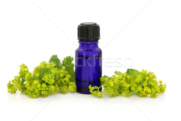 Ladies Mantle Herb Therapy Stock photo © marilyna