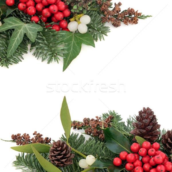 Klimop maretak grens christmas winter sparren Stockfoto © marilyna