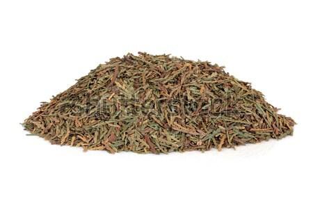 Biota Herb Leaves Stock photo © marilyna