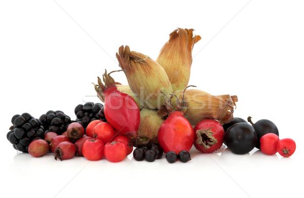 Wild Autumn Fruit  Stock photo © marilyna