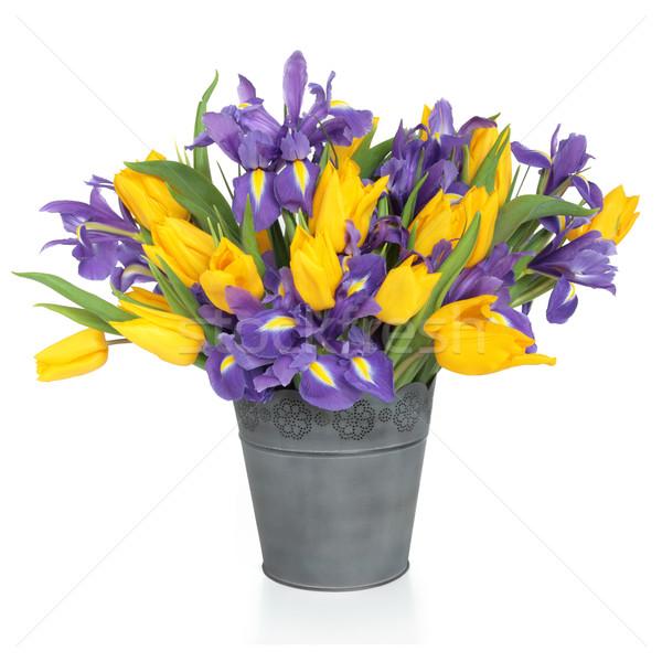 írisz tulipán virágok lila citromsárga virág Stock fotó © marilyna