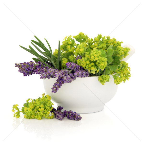 Lavender and Ladies Mantle Flowers Stock photo © marilyna