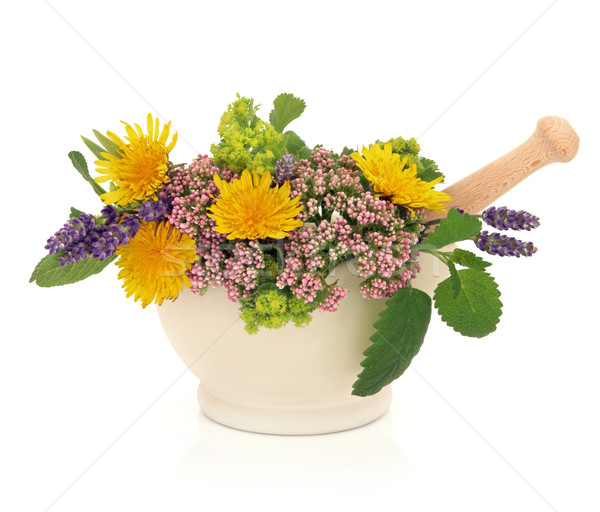 Herb Flower Beauty Stock photo © marilyna