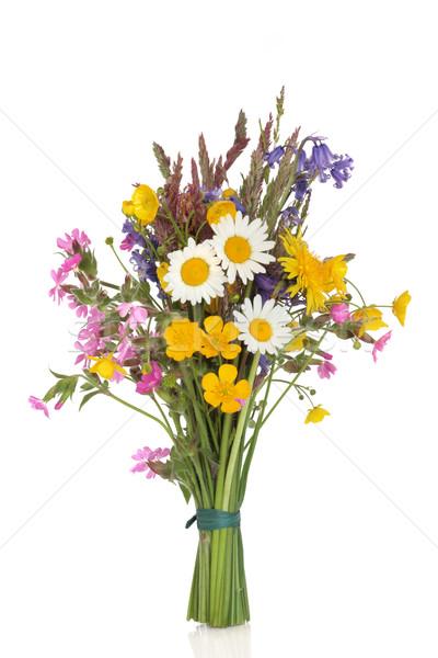 Kır çiçeği kır çiçekleri çim yalıtılmış beyaz Stok fotoğraf © marilyna