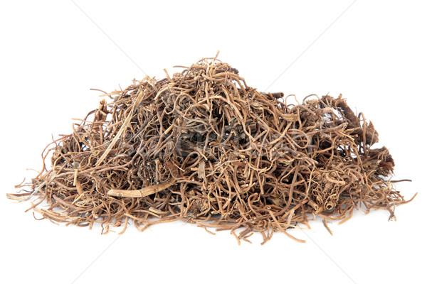 Cynanchum Root Stock photo © marilyna