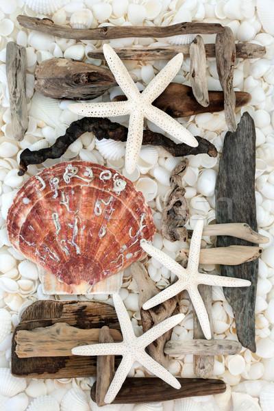 Driftwood streszczenie Rozgwiazda biały muszle Zdjęcia stock © marilyna