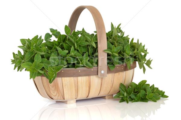 Oregano Herb   Stock photo © marilyna