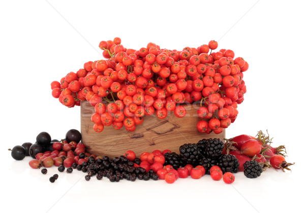 Wild Autumn Berry Fruit Stock photo © marilyna