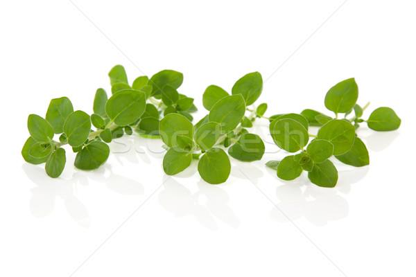 Oregano gyógynövény levelek friss levél izolált Stock fotó © marilyna