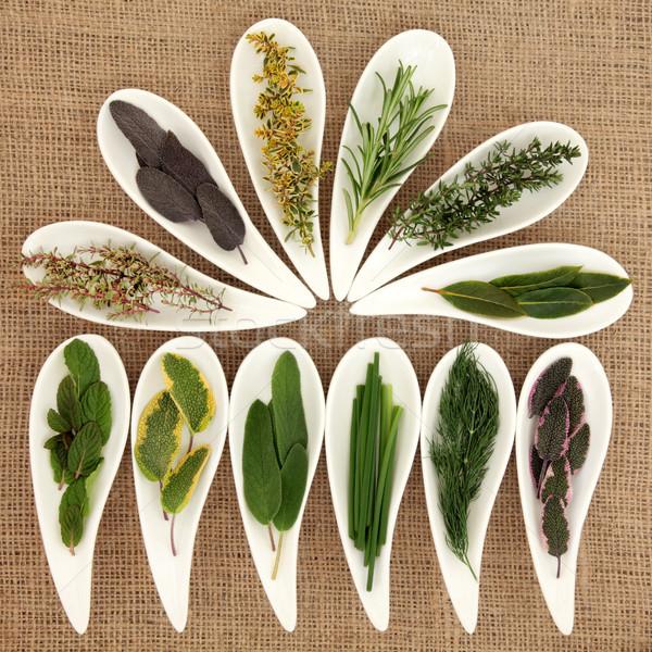 Friss gyógynövények gyógynövény zsálya rozmaring édeskömény Stock fotó © marilyna