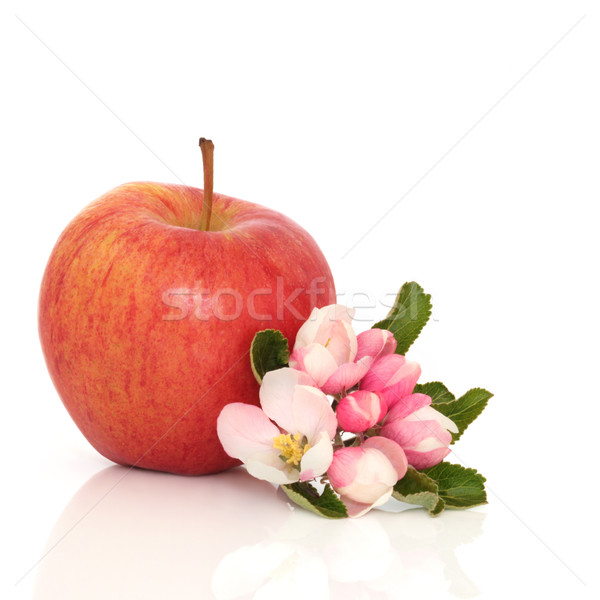 Gala Apple and Flower Blossom Stock photo © marilyna