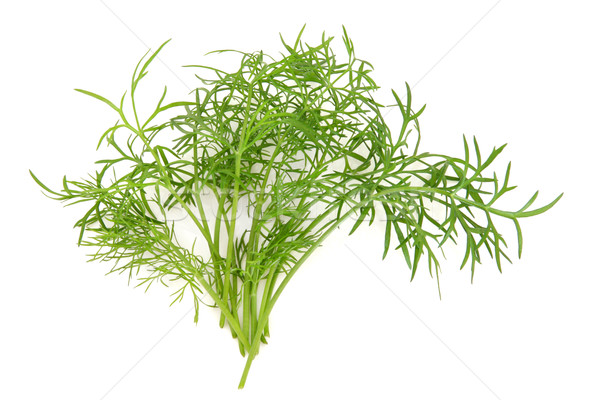 Dilll Herb Leaf Sprig Stock photo © marilyna