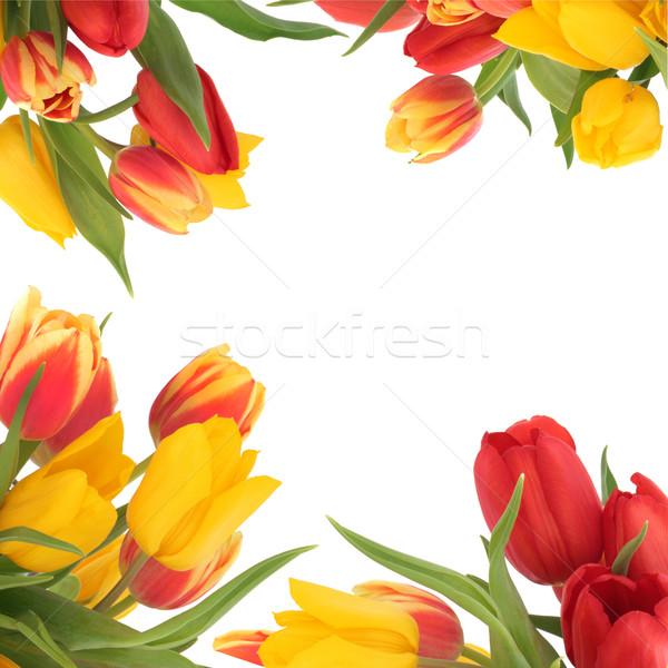 Tulipano fiore confine fiori giallo rosso Foto d'archivio © marilyna