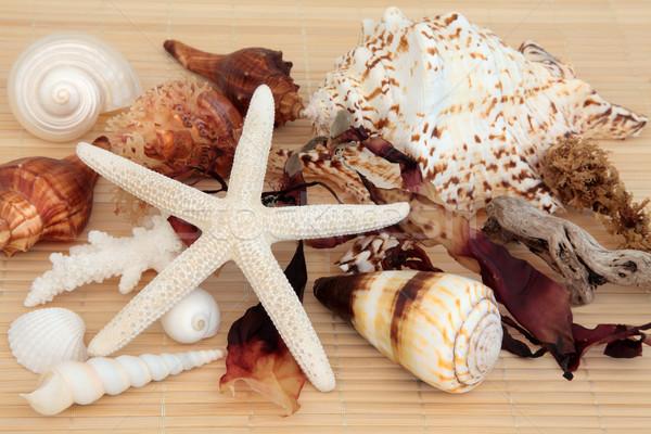 Deniz yosunu güzellik deniz kabuk dalgaların karaya attığı odun Stok fotoğraf © marilyna
