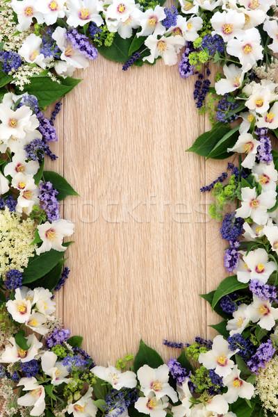 Summer Flower Border Stock photo © marilyna