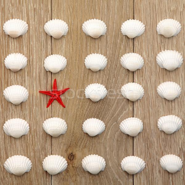 Oneven een uit zeester shell abstract Stockfoto © marilyna