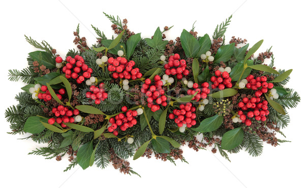 Visco flora natal floral exibir inverno Foto stock © marilyna