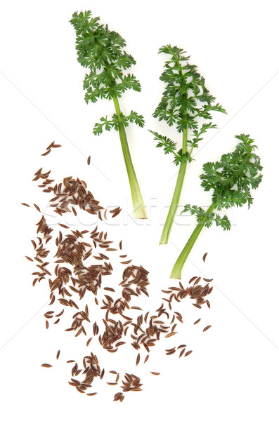Caraway Seed and Leaf Sprigs Stock photo © marilyna
