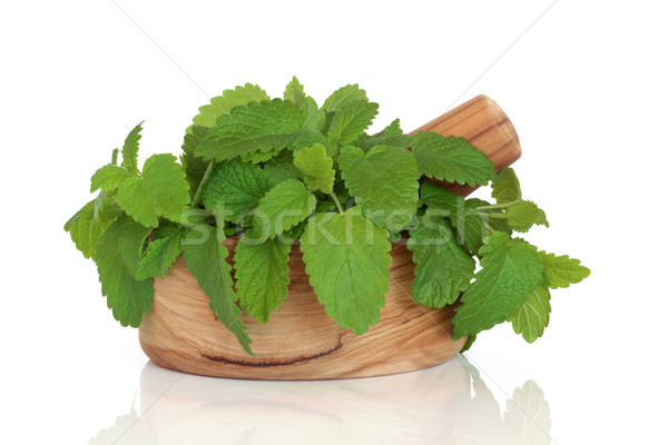 Lemon Balm Herb Leaves Stock photo © marilyna