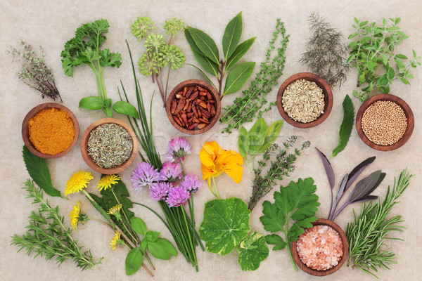 Fresh and Dried Herb Selection Stock photo © marilyna