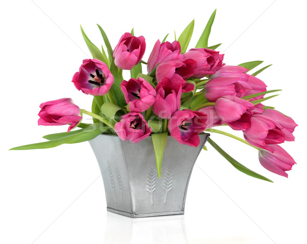 Pink Tulips Stock photo © marilyna