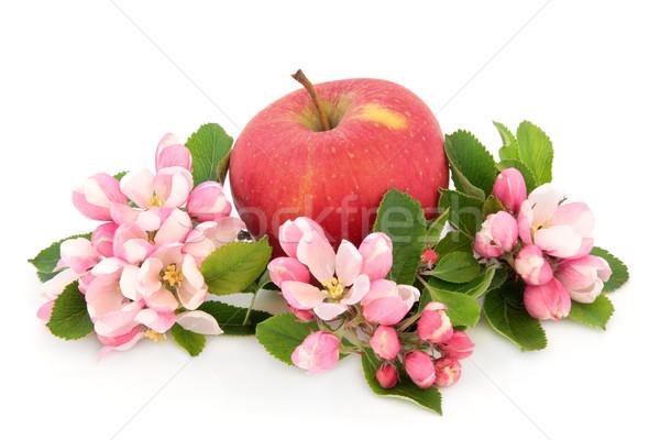 Elma gün kırmızı elma çiçek çiçek beyaz Stok fotoğraf © marilyna