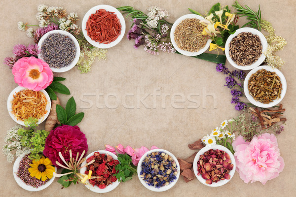 Herbal Medicine Border Stock photo © marilyna