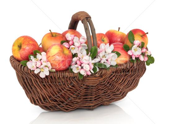Appel bloesem schoonheid gala appels bloem Stockfoto © marilyna