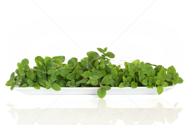 Oregano Herb Leaves Stock photo © marilyna