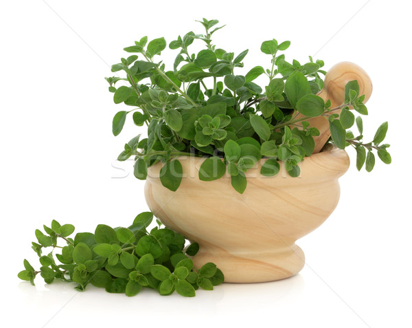 Marjoram Herb Stock photo © marilyna
