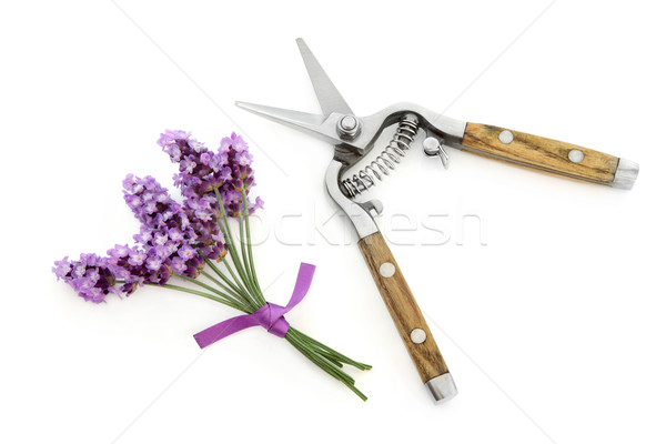 Lavender Herb Flowers and Secateurs Stock photo © marilyna