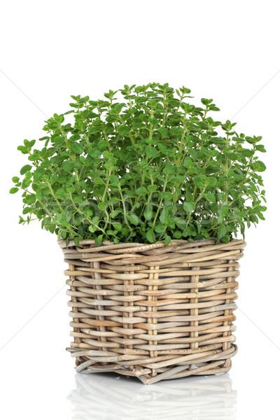Origano erbe impianto rustico basket Foto d'archivio © marilyna
