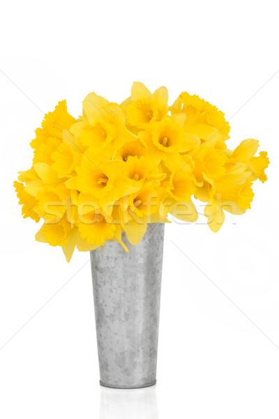 Daffodil цветок красоту цветы алюминий ваза Сток-фото © marilyna