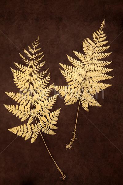 Fern Blatt Schönheit Gold Fauna braun Stock foto © marilyna